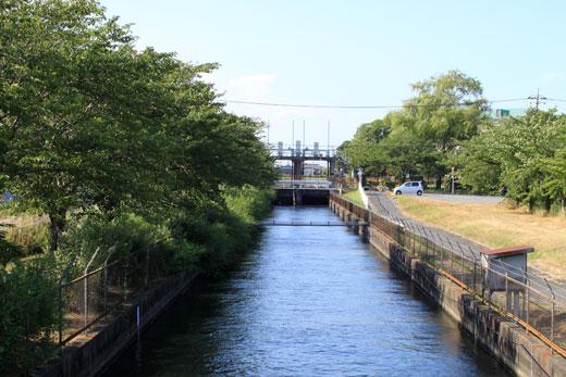 菖蒲町・見沼代用水