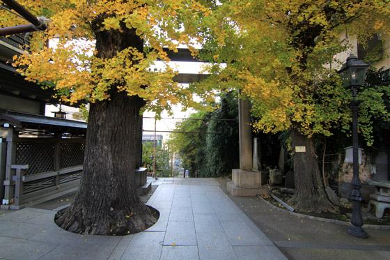 湯島天神男坂上鳥居よりの眺め