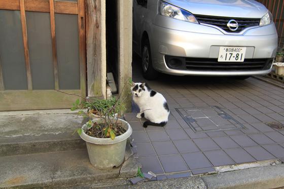 湯島・猫その一