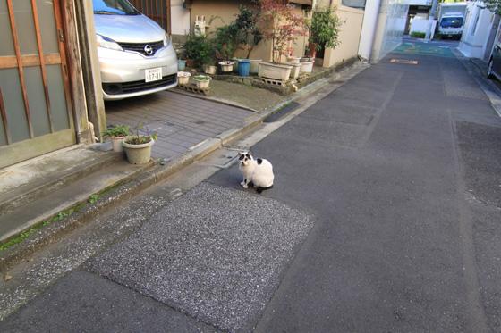 湯島・猫そのニ