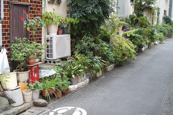 湯島・路地の植木鉢