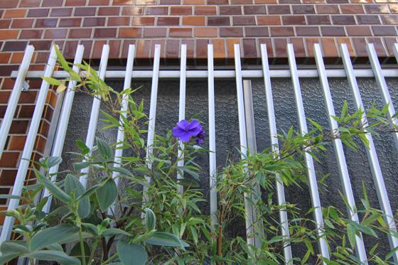 湯島・路地の花