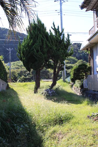 館山市香の糸杉
